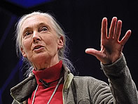 Jane Goodall at TED 2003
