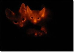 Bioluminescent-cats