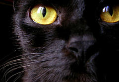 Black cat with yellow eyes