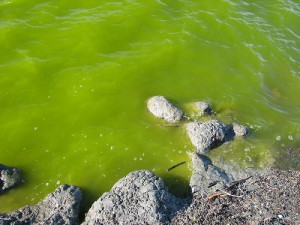 toxic water