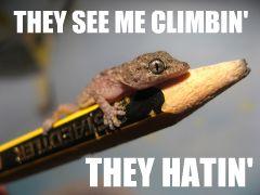 Gangsta gecko