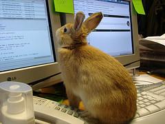 rabbit reading email