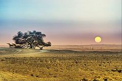 alien desert