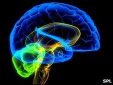 brain-simulation